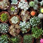 Juicykits.com Plant Selection