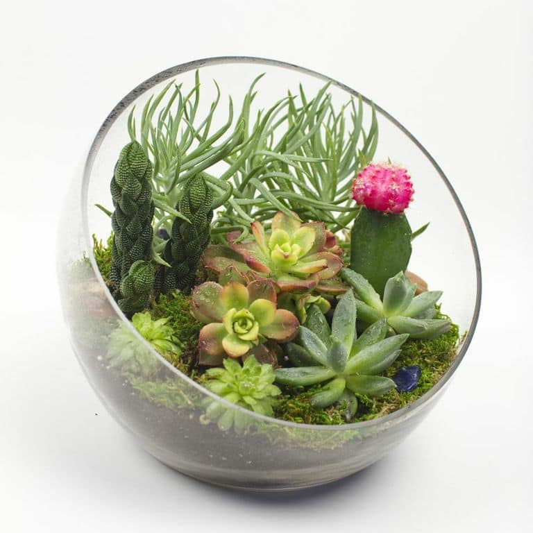 Big Ol' Egg DIY Succulent Terrarium Kit | Juicykits.com