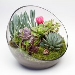 The Big Ol' Egg large glass DIY terrarium kit with 6 succulents