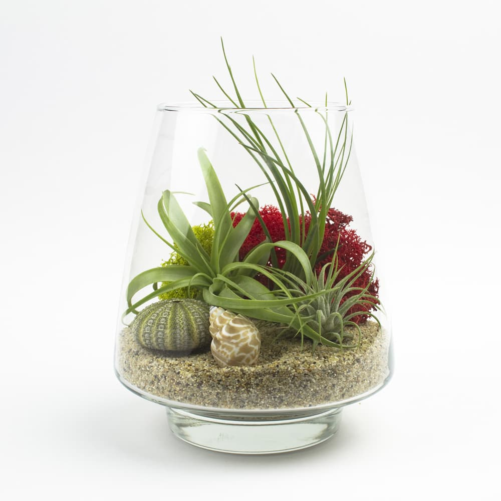 how to make air plant food