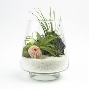 The Arrowhead Air Plant Terrarium