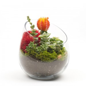 The Sideways DIY Succulent Terrarium Kit