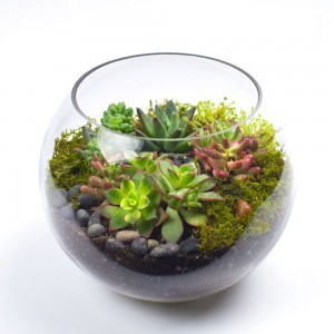 The Sputnik DIY terrarium kit for succulents from juicykits.com