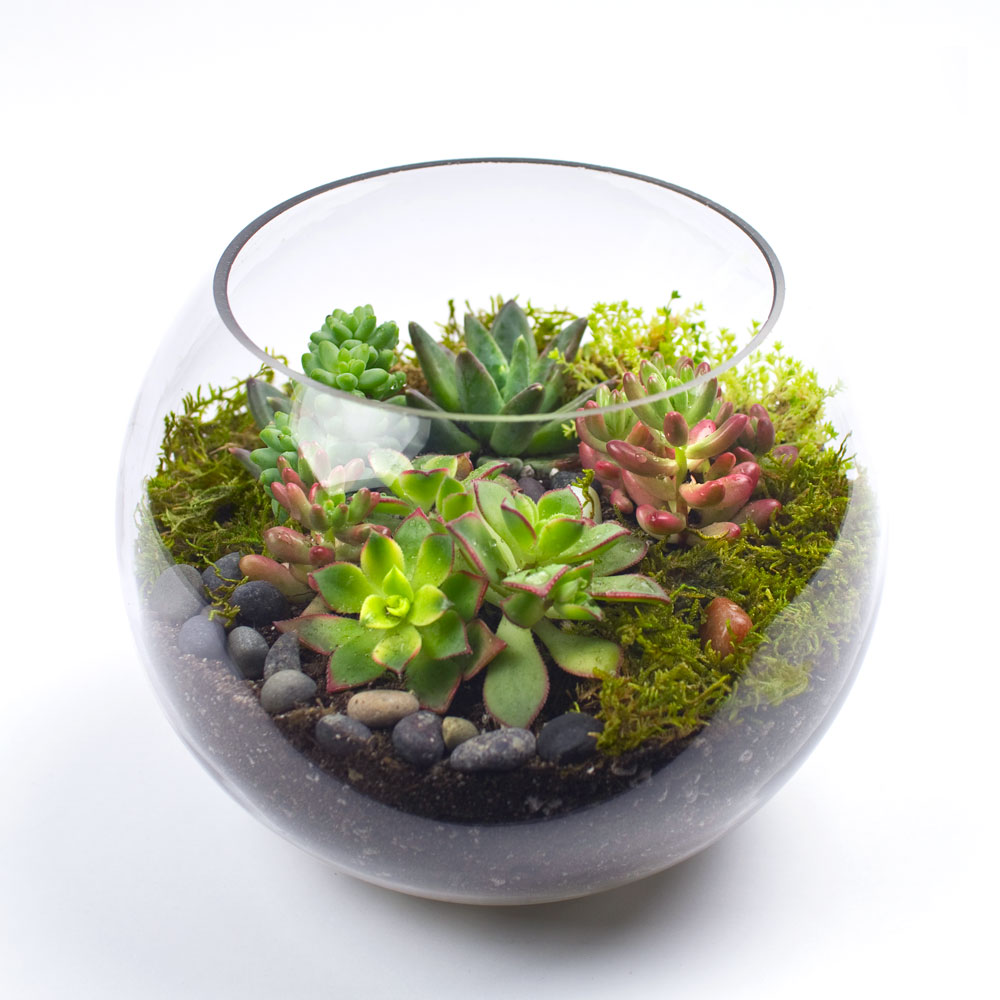 the sputnik diy succulent terrarium kit juicykitscom