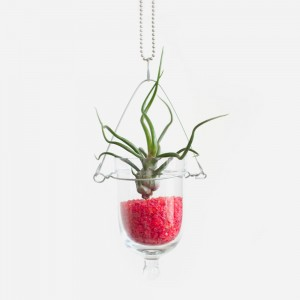 The Bulb DIY Air Plant Terrarium Kit with Red Glass