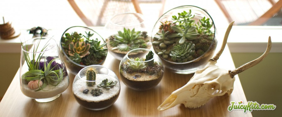 Various Juicy Kits DIY terrariums and goat skull