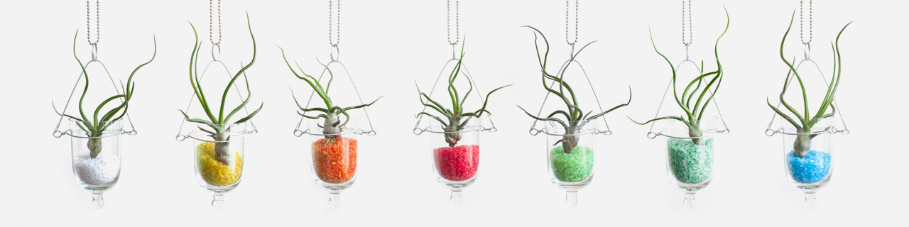 Baby Bulb hanging sir plant terrarium in 7 colors