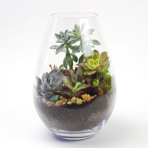 The Crybaby Teardrop DIY Terrarium Kit for Succulents