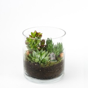 Baby Capitol Tower DIY terrarium kit for succulents