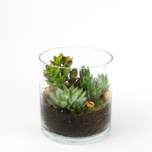 Baby Capitol Tower DIY terrarium kit for succulents