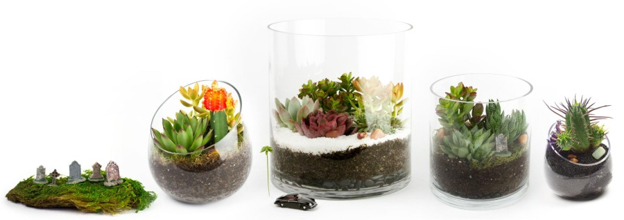 Juicykits.com Fall 2014 Collection of DIY terrarium kits