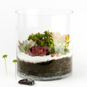 The Capitol Tower DIY terrarium kit for succulents