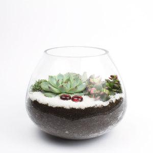 The Dollop DIY succulent terrarium kit by Juicykits.com