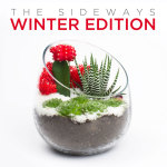 Limited Edition Christmas or Winter Holiday DIY Terrarium Kit by Juicykits.com