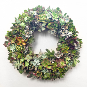 Juicykits Succulent Wreath, a Christmas Wreath with Succulents.