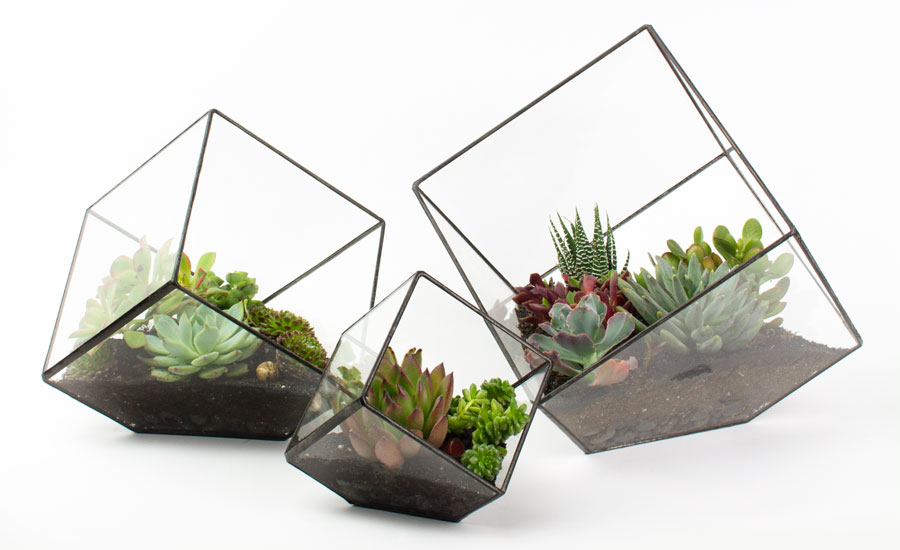 The Rubix Family of DIY Terrarium Kits