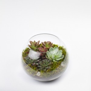 Baby Sputnik small sphere DIY terrarium kit for succulents