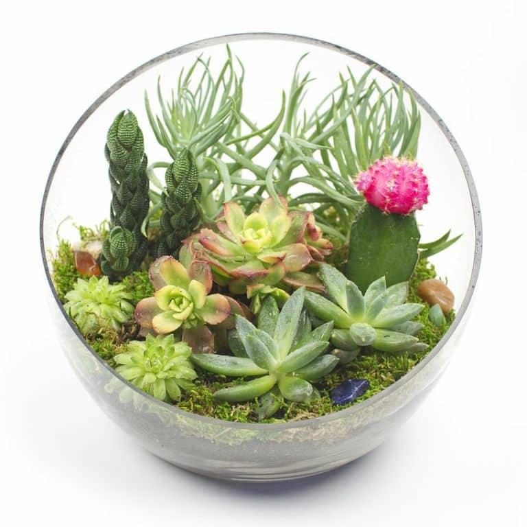Big ... - Big Ol' Egg DIY Succulent Terrarium Kit Juicykits.com