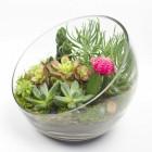 Big Ol Egg, large DIY terrarium kit by Juicykits.com featuring 6 succulents
