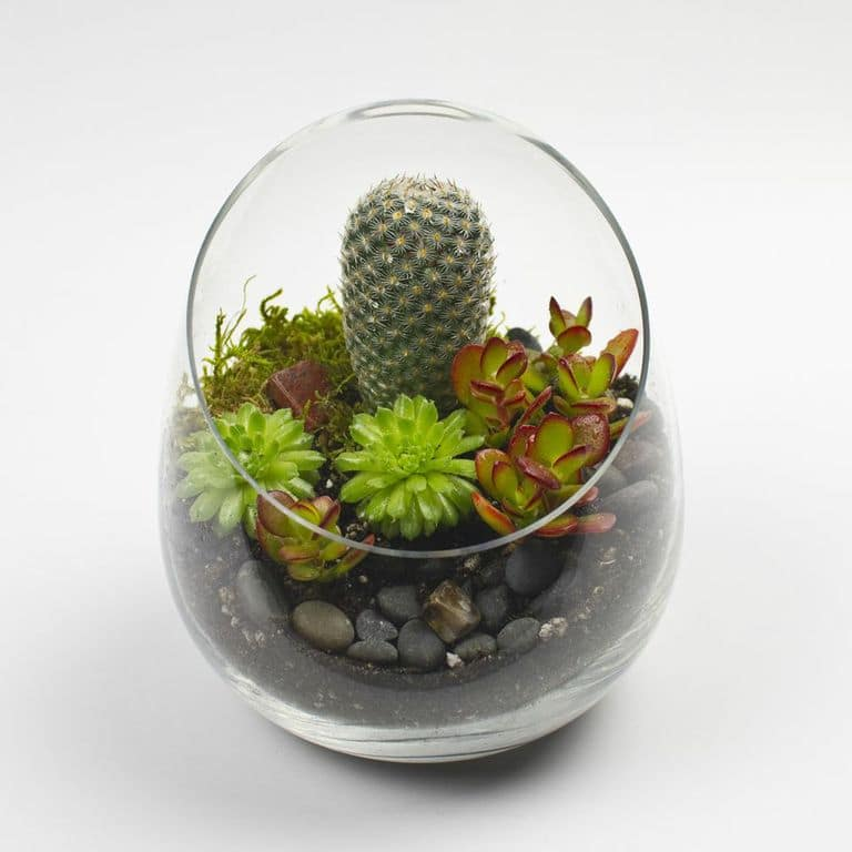 the sideways diy succulent terrarium kit. Black Bedroom Furniture Sets. Home Design Ideas