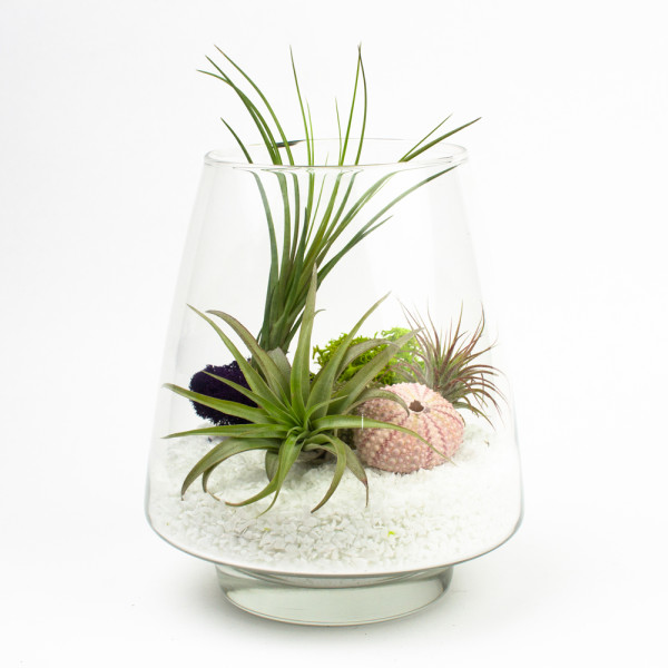 the arrowhead diy air plant terrarium kit. Black Bedroom Furniture Sets. Home Design Ideas