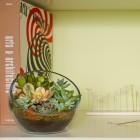 The Egg DIY Succulent Terrarium Kit with Architecture Book