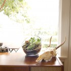 Big Ol' Egg DIY Terrarium Kit with goat skull and mid-century wood furniture