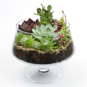 The Brandy Snifter DIY Terrarium Kit for Succulents and Cacti