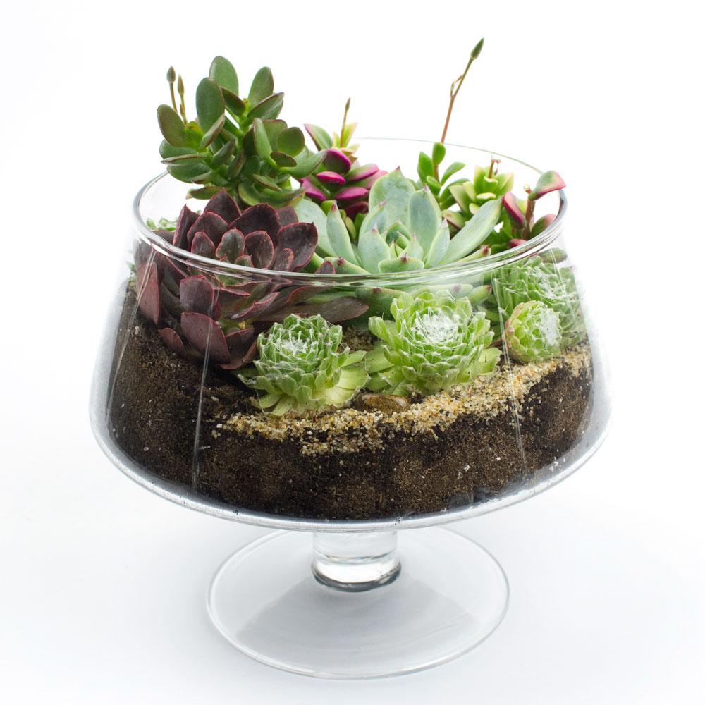 The Brandy Snifter Terrarium Kit - The Brandy Snifter DIY Succulent Terrarium Kit Juicykits.com