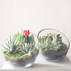Two of The Egg DIY Terrariums from Juicykits.com