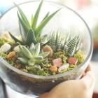 The Egg DIY Succulent Terrarium Kit with Optional Multicolored Gemstones