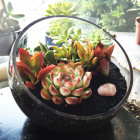 The Egg DIY Succulent Terrarium with Black Sand Topping