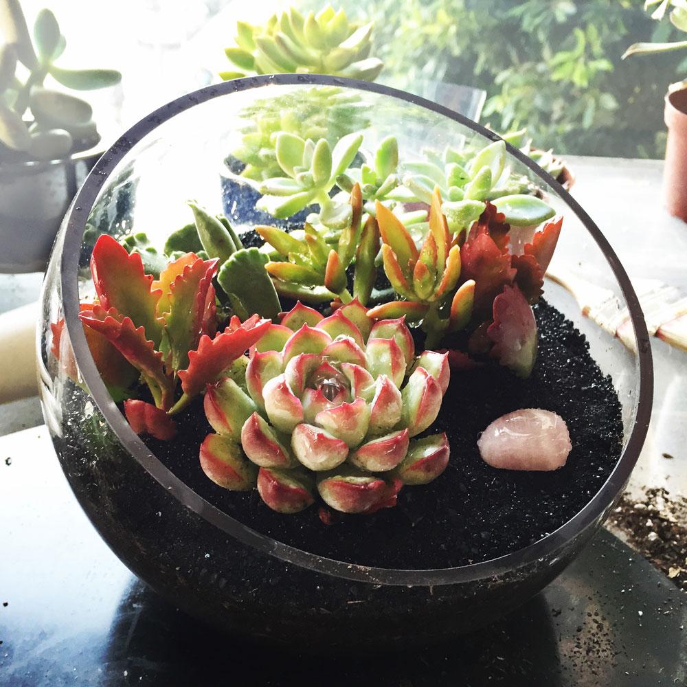 Diy Succulent Terrarium Wedding - Do It Your Self