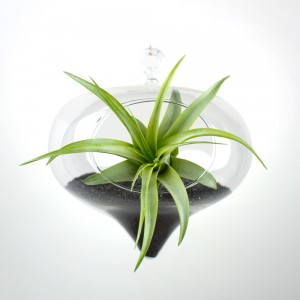 The Hypnotist Hanging Air Plant Terrarium DIY Kit with Black Sand