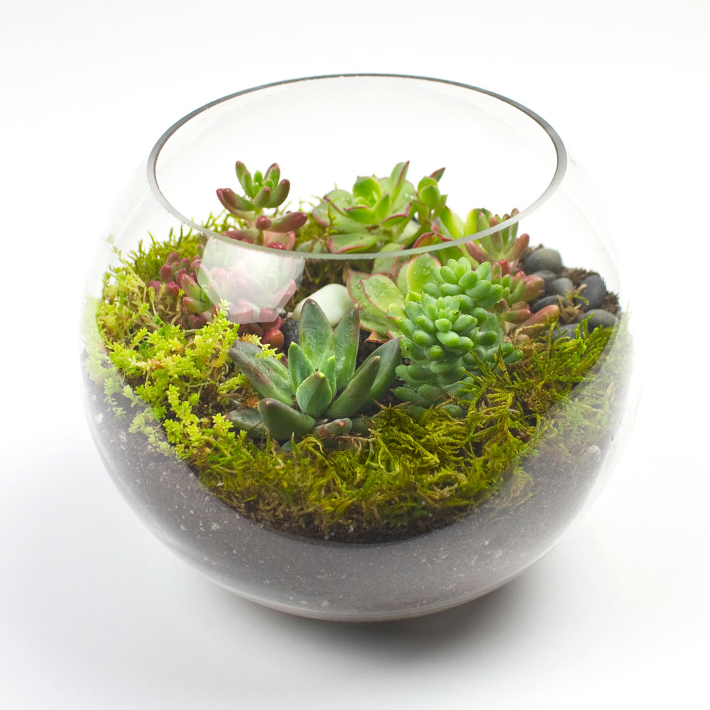 The Sputnik DIY Succulent Terrarium Kit   Juicykits.com