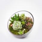 The Egg DIY Succulent Terrarium