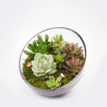 The Egg DIY Succulent Terrarium