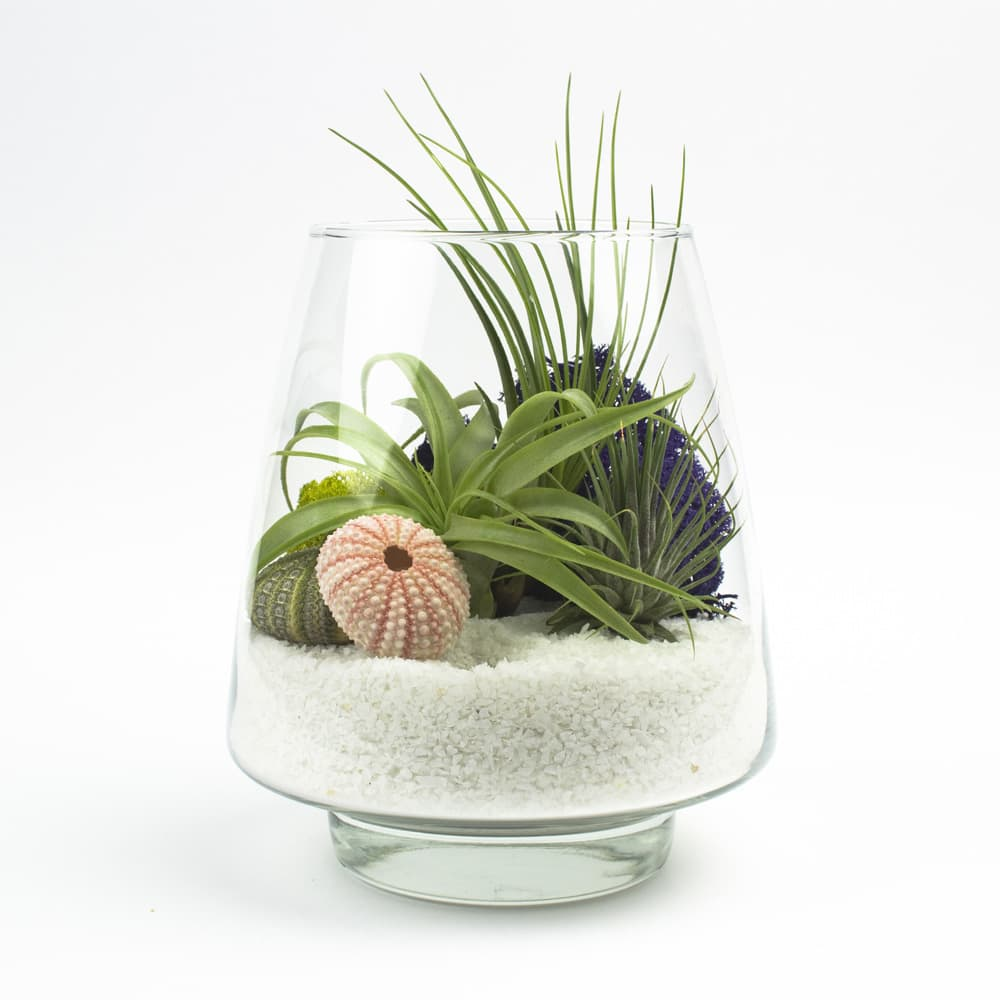 The arrowhead diy terrarium kit with air plants for Air plant decoration