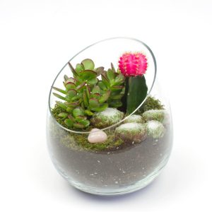 The Sideways Wine Glass shaped succulent terrarium DIY kit from Juicykits.com