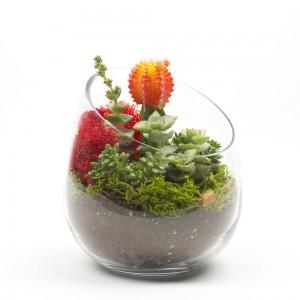 The Sideways DIY Succulent Terrarium Kit