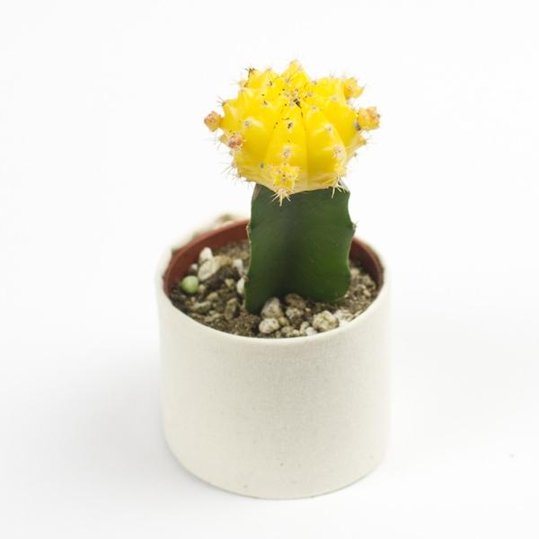 Succulents Menu Juicykits Com