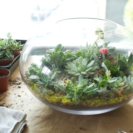 How to juicykits how to assemble a juicykits terrarium kit solutioingenieria Image collections