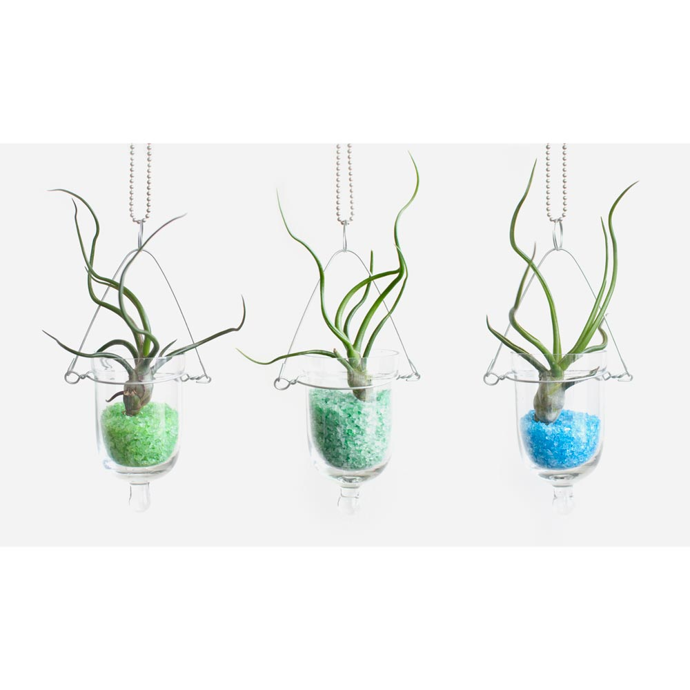 Baby Bulb DIY Hanging Air Plant Terrarium Kit