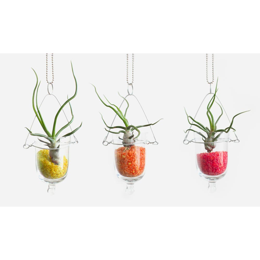 Air Plant Terrarium Baby Bulb Diy Hanging Air Plant Terrarium Kit Juicykitscom