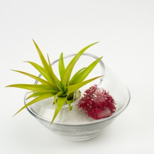 Baby Roswell DIY Terrarium Kit for Air Plant