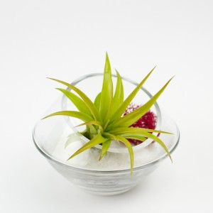 Baby Roswell Air Plant Terrarium in White