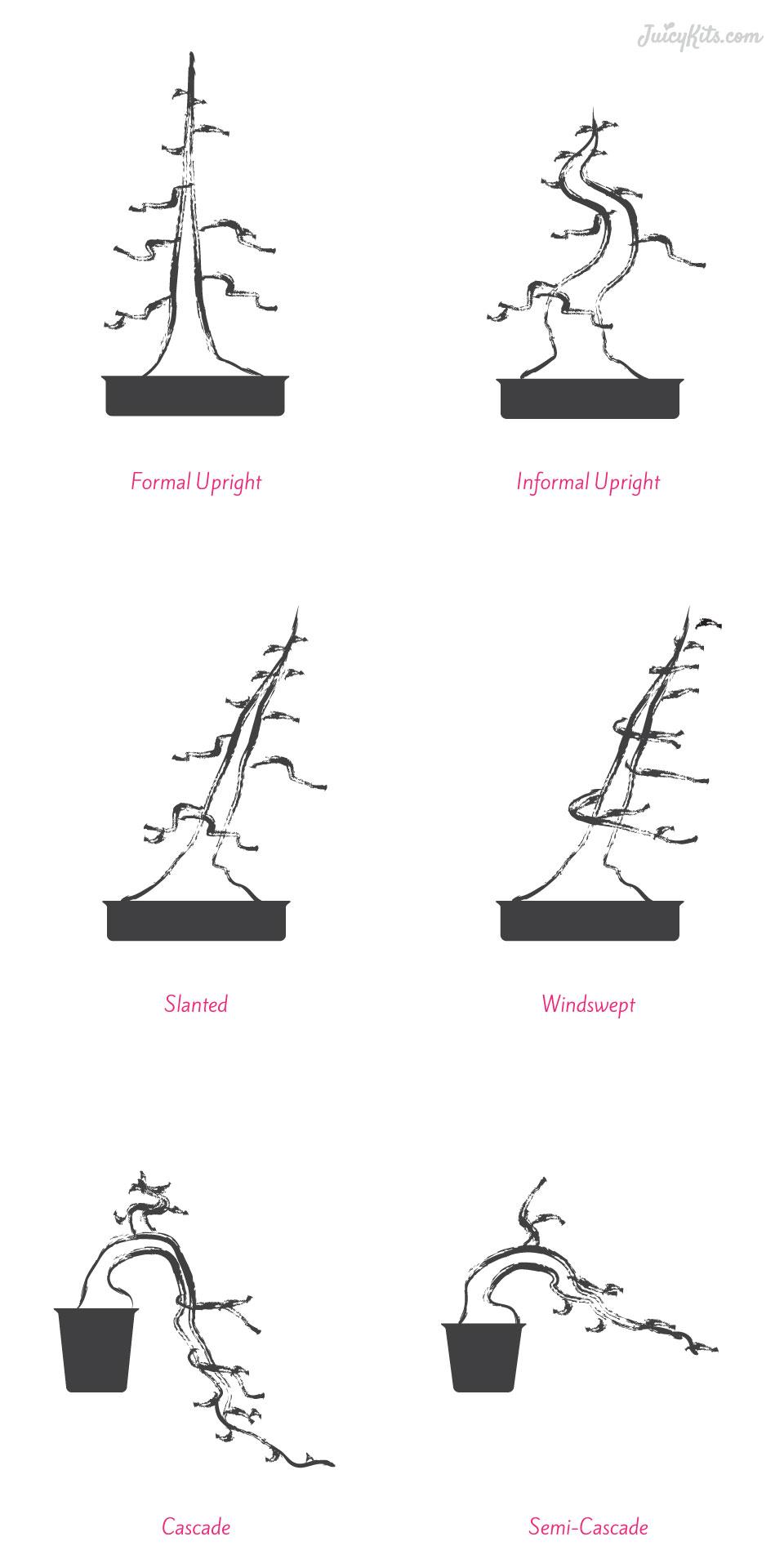 The Basics Of Succulent Bonsai Tree Wiring Video Main Styles