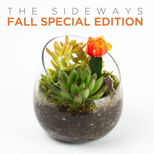Autumn Special Edition Sideway DIY Terrarium Kit for Succulents
