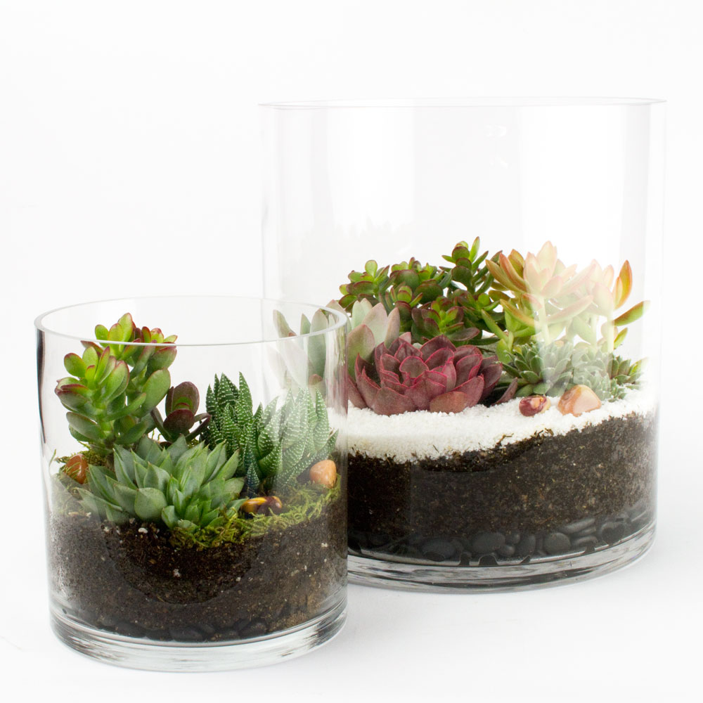 The capitol tower diy succulent terrarium kit juicykits the capitol tower solutioingenieria Image collections