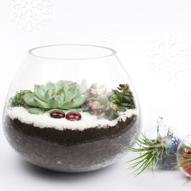 Juicykits Winter Collection of holiday succulent terrarium kits for gifts